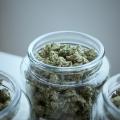 cannabis marketing